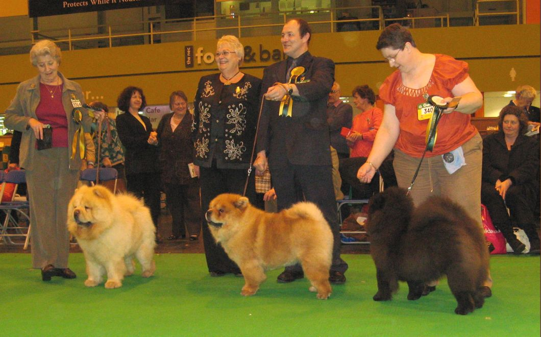 BOB CC Tanlap Tiftytitan-BOS CC Denrob Dancing Queen-Best puppy Shasadee The Bedazzled With Santicana