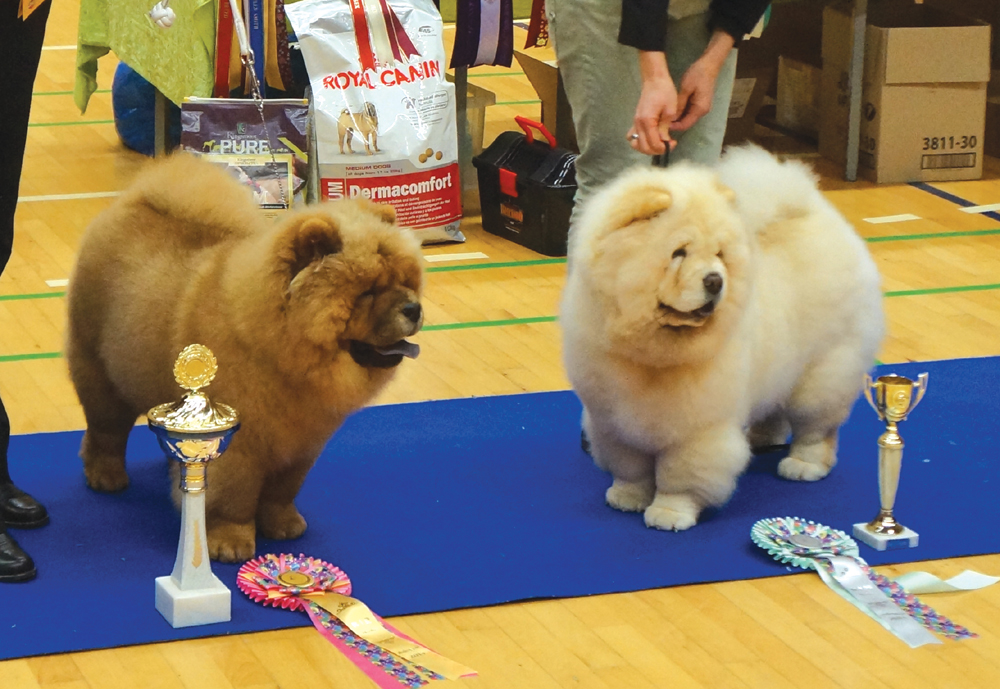 Best puppy +  BIS puppy (left) Justin For Liu-Su Style Of Mary and BOS puppy Orinell´s Live Your Dream