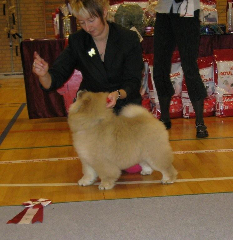 Best baby-Piuk Chow Danish Princess Passion