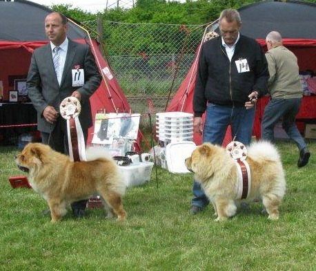 Best dog 3. Mi-Pao´s Canadian Mountie 4. Mi-Pao´s Red Sumac