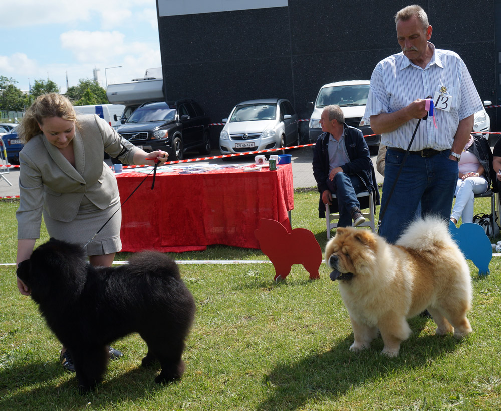 Champion dog 1. CH Bidachows Amazing Armani 2. CH Mi-Pao´s Red Sumac