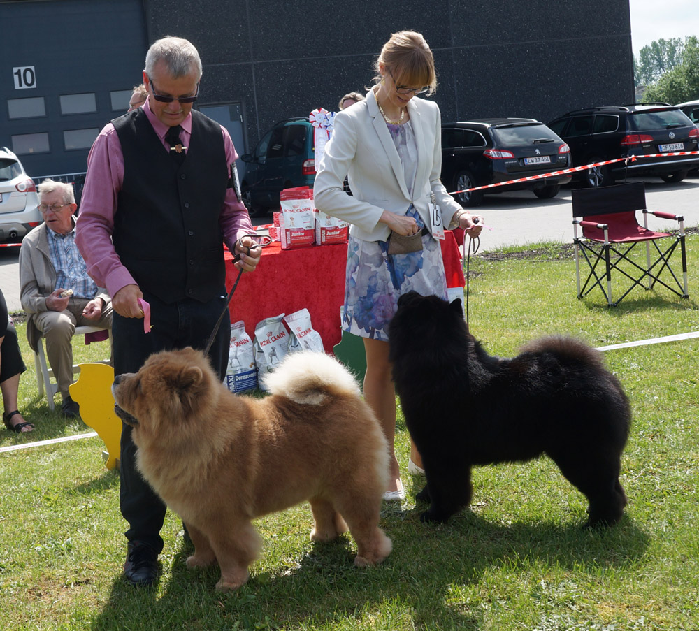 Champion dog 3. CH Chan-Lo´s Can´t Buy Me Love 4. CH Piuk Chow Possesses Black Passion