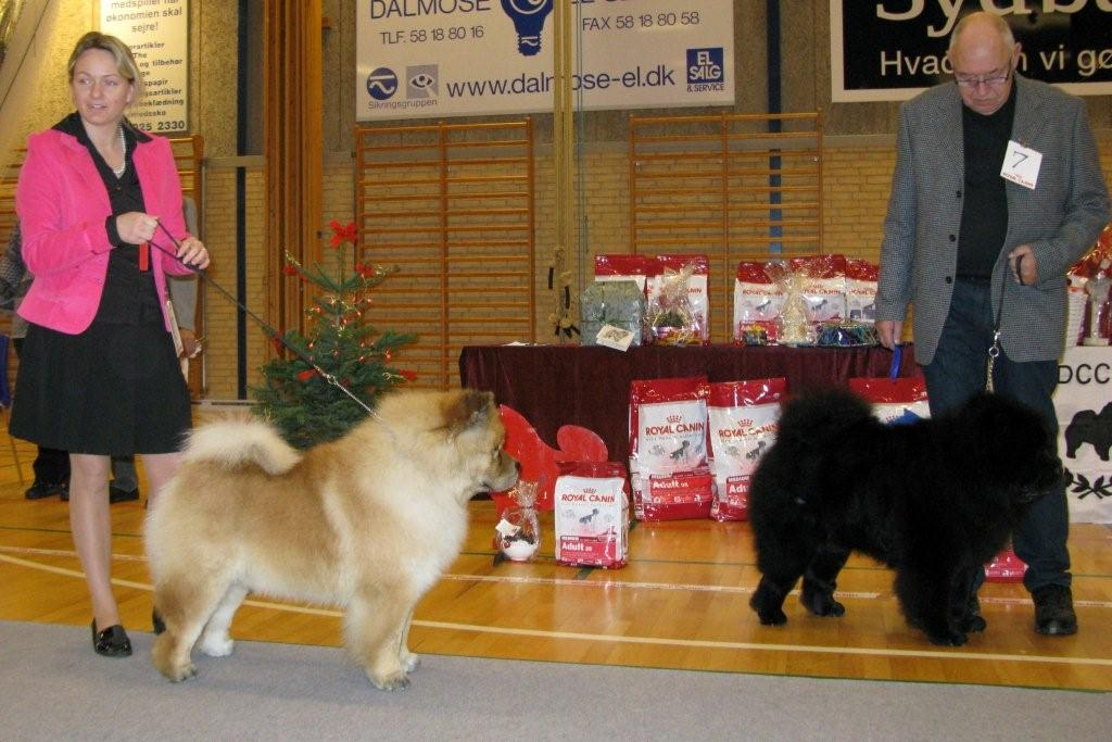 Champ.male 1.CH Bidachows Gentle Gibson 2.CH Orinell´s Extra Extra