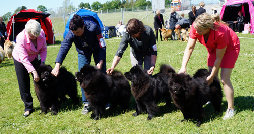 2nd best breeding group: Bidachows