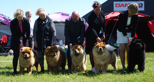 Best breeding group: Piuk Chow