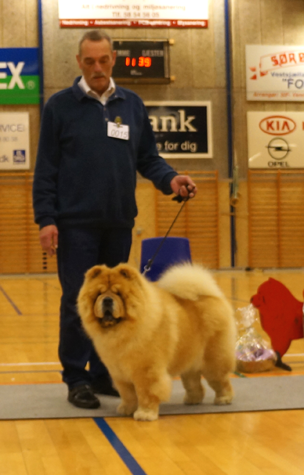 Champ.male 1.+New ClubChampion CH Mi-Pao's Red Sumac