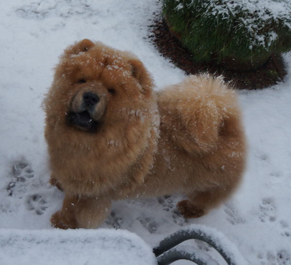 Luka in the snow - 6½ month