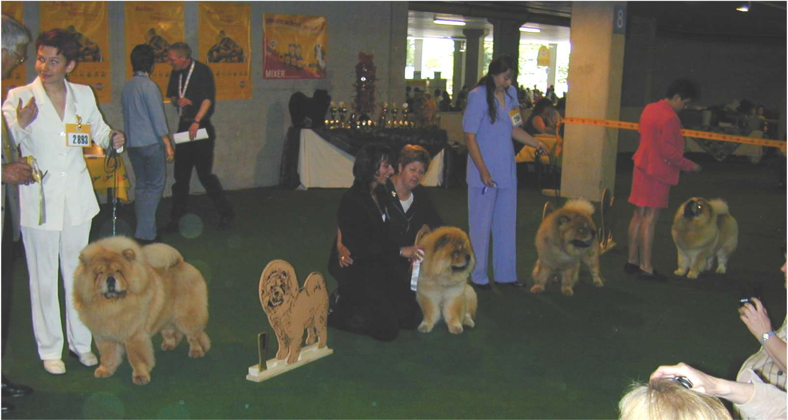 Youth World Winner: Bon Triumph Alex-2nd:Tin Pan Alley Al Pacino-3rd:Mortimer-4th:Chinabear Golden Eclipse