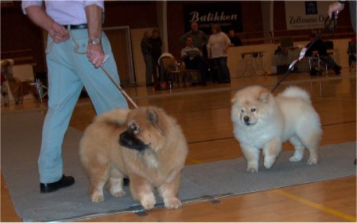Best baby (left) Fuh-Thu-Chow´s Inka-Rose+Litchi Chow Daisy May