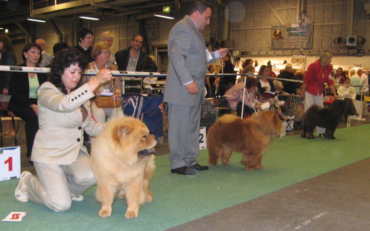 Champion males 1. CH Mi-Pao´s Canadian Red Sugar 2. CH Kuma Del Fiume Giallo At Sumsai 3. CH Pei Fang Moody Blue