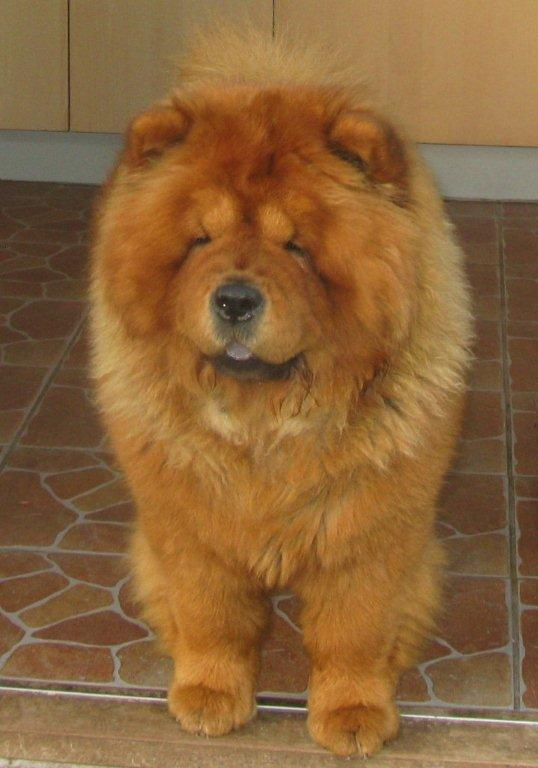 Azalia For Annalise (Zara)-female born 2010 - import from Russia - died 5½ year old