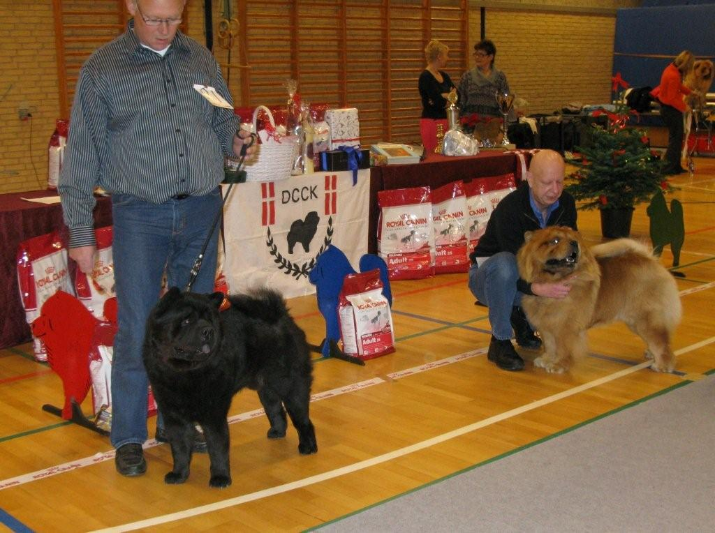 Intermediate male 1. Bidachows Lord Luke The Smooth 2. Piuk Chow Privat Passion