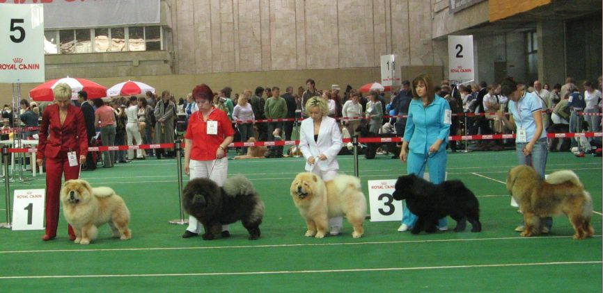 Junior males (not placed)-number 4 in the line-up: Best Junior Prince Datskii iz Sviatoga Graalia