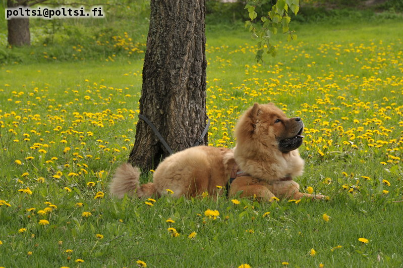 Stagebo´s Wild Thing (Nalle)-6 month