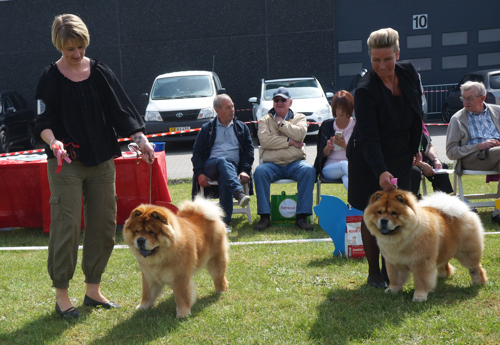 Intermediate dog 1. Chan-Lo´s From Me To You 2. Piuk Chow Plenty Of Summer Success