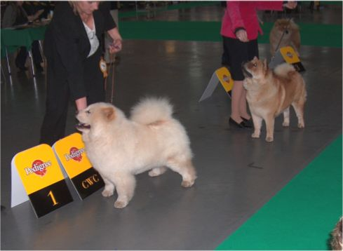 Open female-1. Pei Fang Creme De la Creme 2. Bidachows Graceful Smooth Gabby