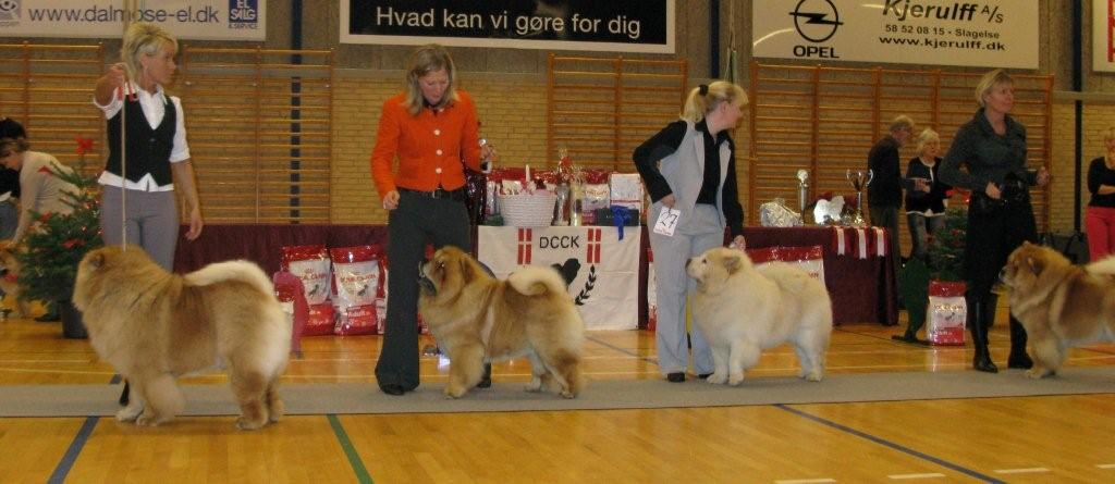 Open male 1.Sakumas Sweetest Catch 2.Orinell´s Ego Trip 3.Rossy Cream Colombo 4. Nørskov´s Combat Red Warrior