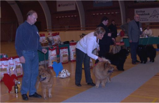Open males 1. Bidachows Funky Smooth Foxy 2.Peli´s Jing Balou Of Flensborg