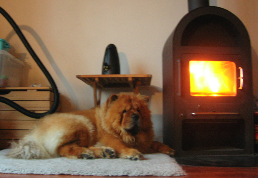 After a very rainy show Voulle is enjoying the fireplace