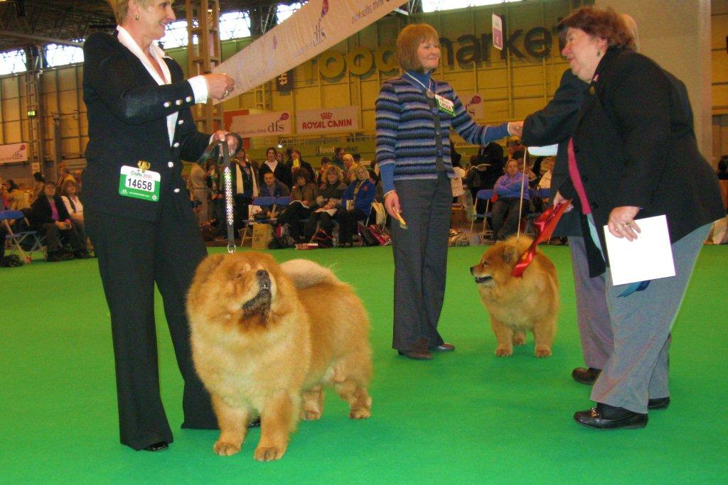 Vet.bitch 1.+Res.CC CH Mactykes American Beauty At Komatsu 2.Christmas Cracker At Larchow